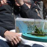 La pause thé à la menthe au Maroc sur un voyage moto Harley