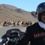 Dans le sud du Maroc lors d'un voyage moto Harley